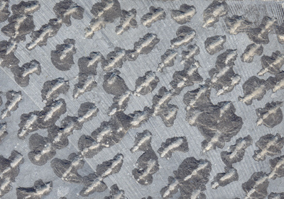 Basalt Lychee